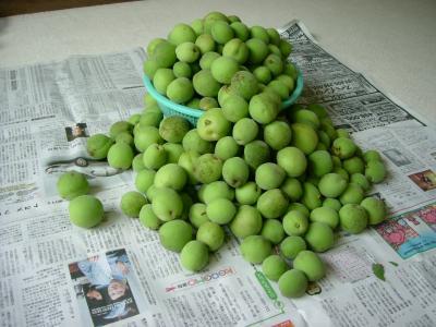 7kg収穫