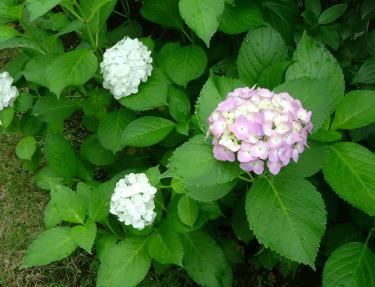 flower201106_2