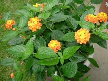 flower201106_4