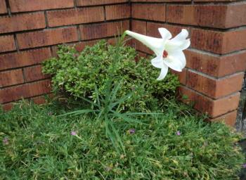 flower20110820