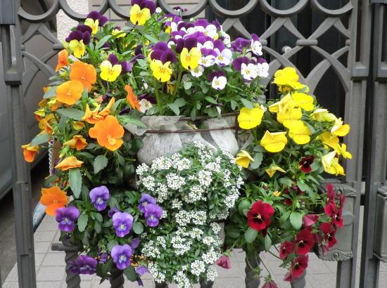 flower20120419