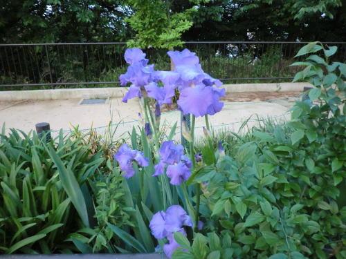 flower20120506_2