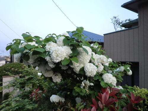 flower20120506_4