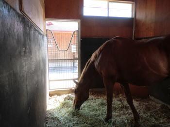 n_horse_p6-2