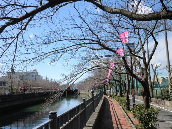 ooka_sakura_20120325_1