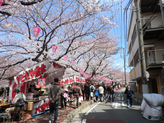 oookasakura_20120407_2