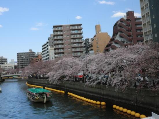 oookasakura_20120407_4
