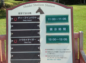 shadai_s_station2