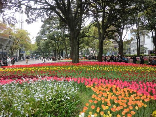 y_tulip_1