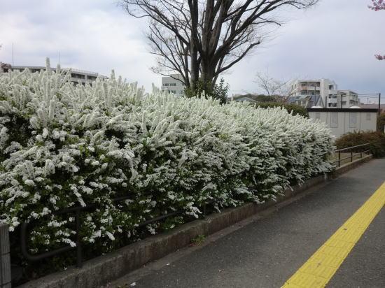 yukiyanagi_1