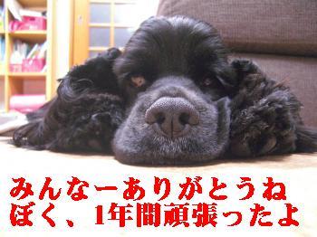 CIMG2109_convert_20110228095705.jpg