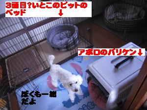 CIMG2260_convert_20110314150039.jpg