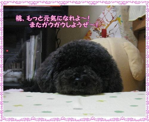 002_20101007211906.jpg