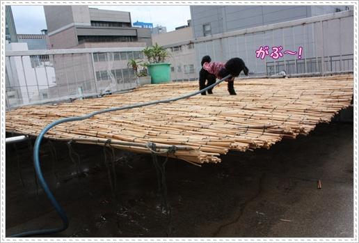 036_20100806151836.jpg