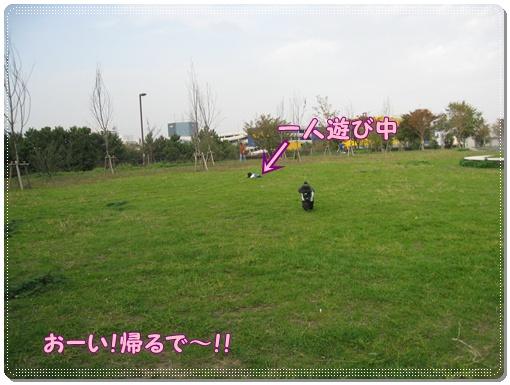 036_20101116150033.jpg