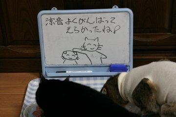 kotasuzu143.jpg