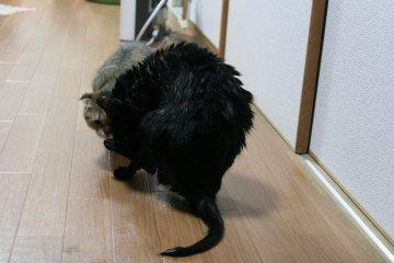 kotasuzu156.jpg