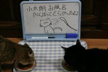 kotasuzu157.jpg