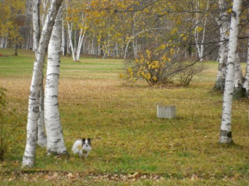 2012-10-30-1+003_convert_20121030185001.jpg