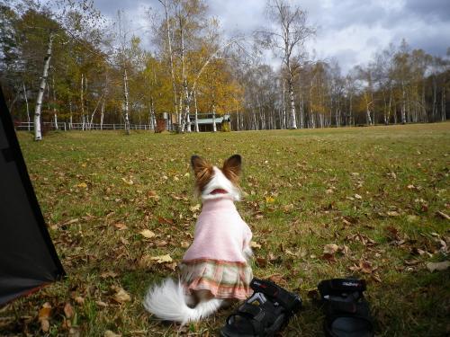 2012-10-30-1+005_convert_20121030185054.jpg