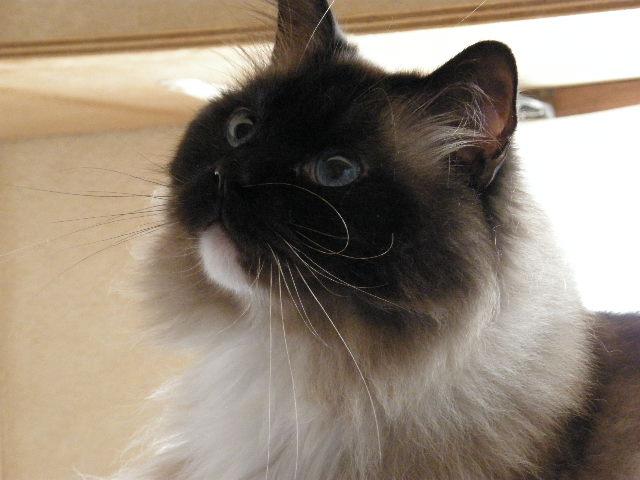 cat 041