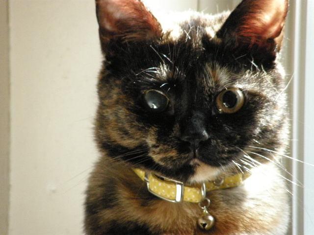 cat 022