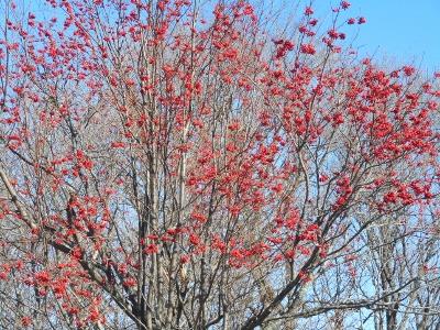 網走の紅葉