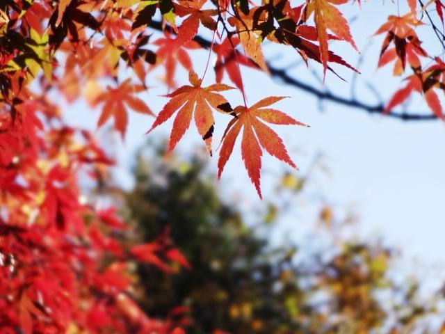 紅葉2_20131123