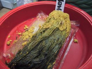 水菜のウコン漬