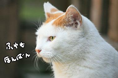 IMG_71721.jpg