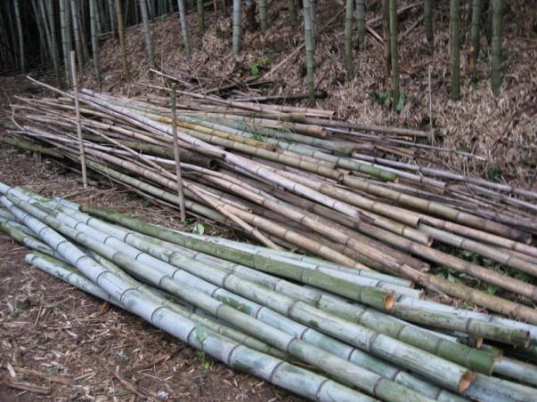 切りそろえた竹