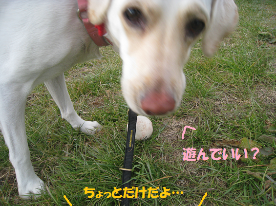 IMG_7437-07.png