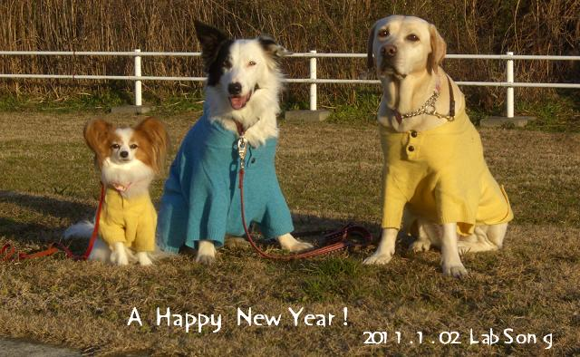 happynewyear_20110113233947.jpg