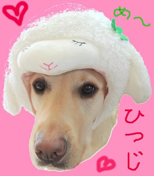 年賀状用の羊ちゃんの被り物1