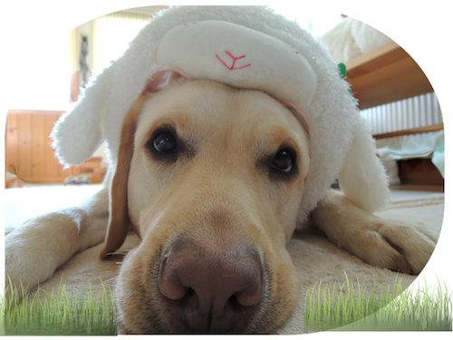 年賀状用の羊ちゃんの被り物2