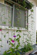 Project Green Wall 2012 - 朝顔