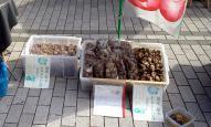 美味しそうな干し椎茸のてんこ盛り