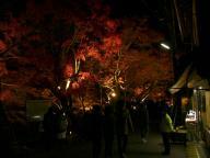 栄屋の前の紅葉