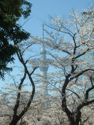 2012_04_08_koutou_sumida+010_convert_20120427112800.jpg