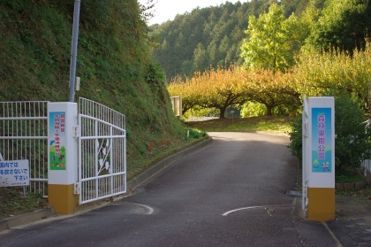 1124_1森林果樹公園