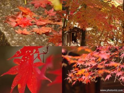 1126_5定光寺の紅葉