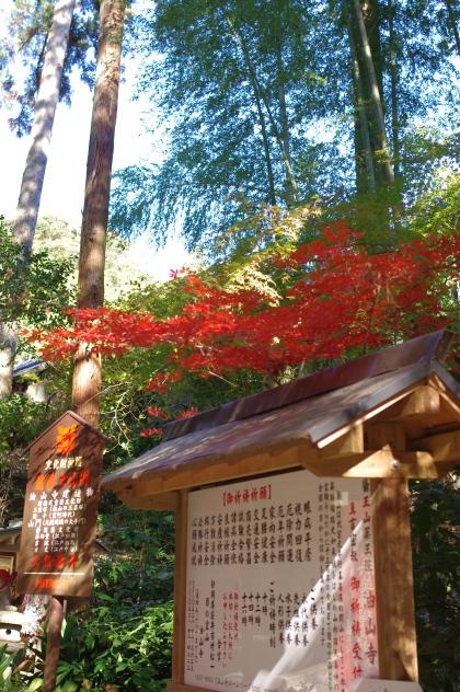 1203_7竹と紅葉
