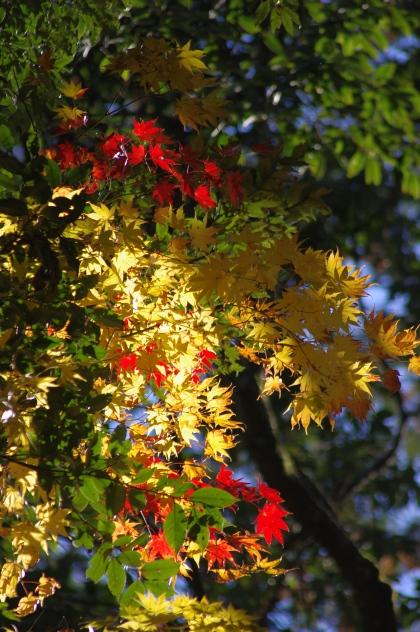 1203_16赤黄緑