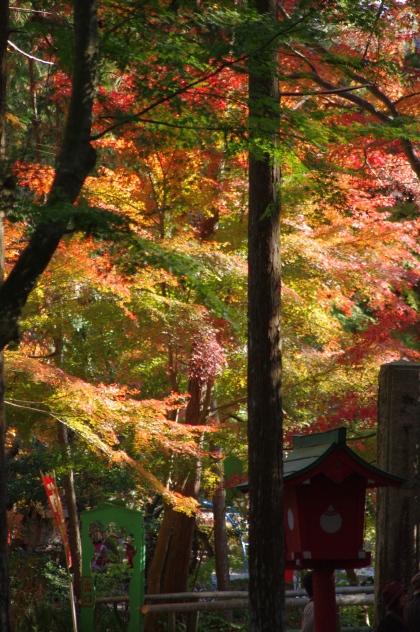 1203_17木々