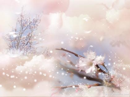 1204_3十月桜S