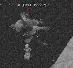 turkey8.jpg