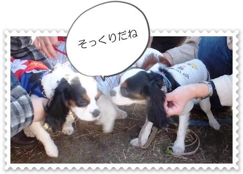 blg13christenesatooyakai1201F7166.jpg