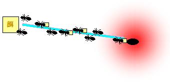 ant_r5