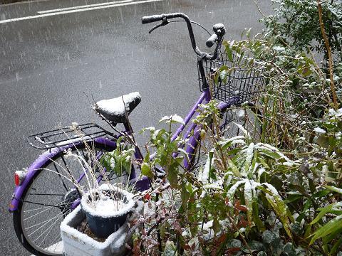 大阪は雪1102