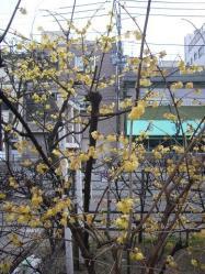 梅祭り1102-3